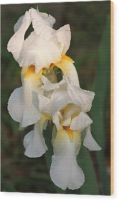 Wood Print featuring the photograph Two White Bearded Iris At Dusk by Sheila Brown