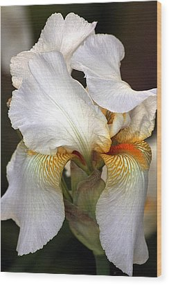 Wood Print featuring the photograph White Bearded Iris by Sheila Brown