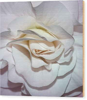 White Begonia Wood Print by Robert Shard