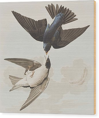 White-bellied Swallow Wood Print by John James Audubon