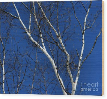White Birch Blue Sky Wood Print