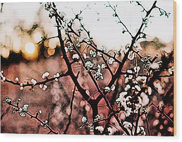 White Blossom Branches Wood Print by Carol Crisafi