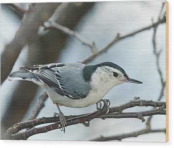 Wood Print featuring the photograph White Breasted Nuthatch 2017 2 by Lara Ellis