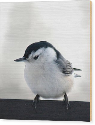 White Breasted Nuthatch Wood Print by Diane Merkle