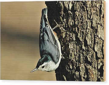 White-breasted Nuthatch On Tree Wood Print by Sheila Brown