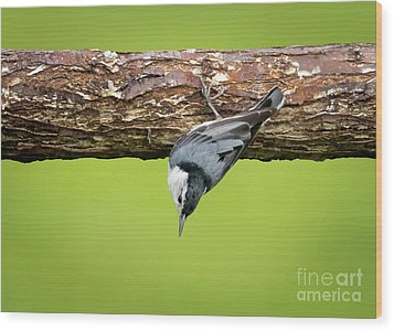 Wood Print featuring the photograph White-breasted Nuthatches by Ricky L Jones