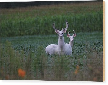 White Bucks Wood Print