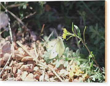 White Butterfly On Goldenseal Wood Print by Colleen Cornelius