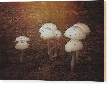 White Cap Mushrooms Wood Print by Carolyn Dalessandro