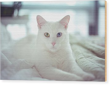 White Cat Laying On Comfy Bed Wood Print by by Dornveek Markkstyrn