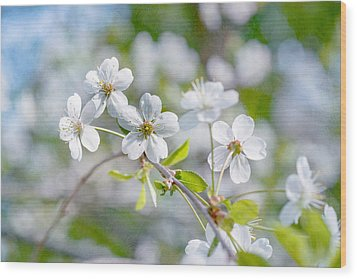 Wood Print featuring the photograph White Cherry Blossoms In Spring by Alexander Senin