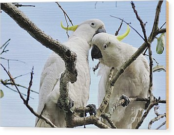 White Cockatoos Wood Print by Kaye Menner