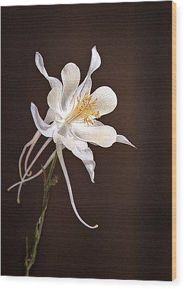 White Columbine Wood Print by James Steele