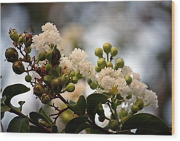 Wood Print featuring the photograph White Crape Myrtle- Fine Art by KayeCee Spain