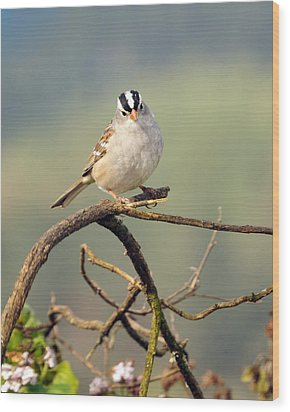 White Crowned Sparrow Wood Print