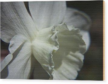 White Daffodil Wood Print by Teresa Mucha