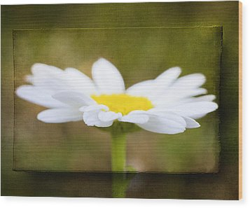 Wood Print featuring the photograph White Daisy by Eduard Moldoveanu