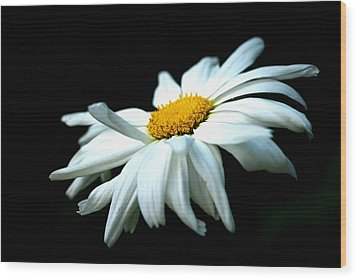 Wood Print featuring the photograph White Daisy Flower In The Wind by Alexander Senin