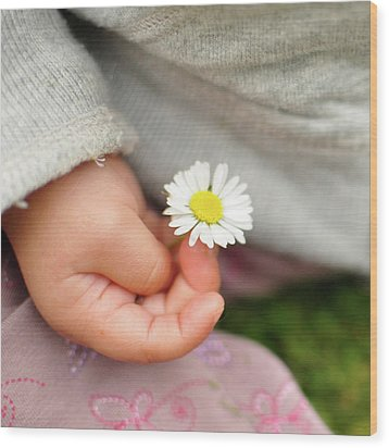White Daisy In Baby Hand Wood Print by © Mameko