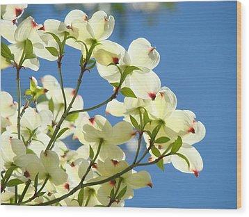 White Dogwood Flowers 1 Blue Sky Landscape Artwork Dogwood Tree Art Prints Canvas Framed Wood Print by Baslee Troutman