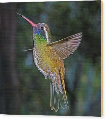 Wood Print featuring the photograph White Eared Hummingbird by Gregory Scott