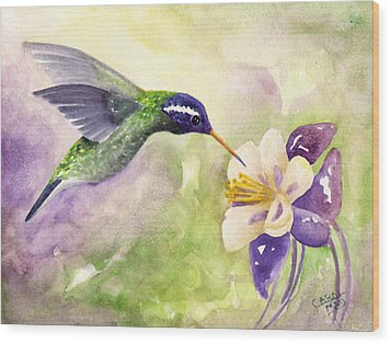 White-eared Hummingbird Wood Print by Art by Carol May