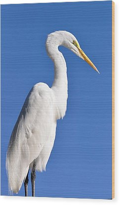 White Egret Against Blue Sky Wood Print by Rose  Hill