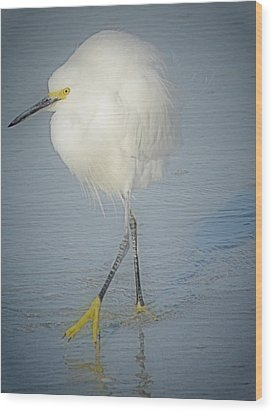 White Egret At Sunrise Wood Print by Rose  Hill