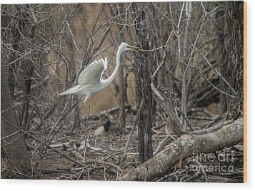 Wood Print featuring the photograph White Egret by David Bearden