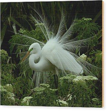 White Egret Displaying Wood Print by Myrna Bradshaw