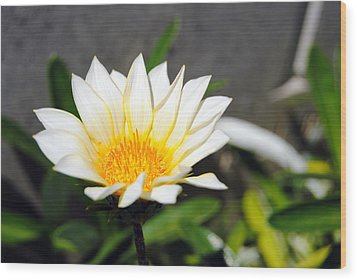 White Flower 3 Wood Print by Isam Awad