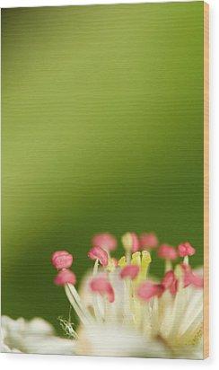 White Flower Wood Print by Jouko Mikkola
