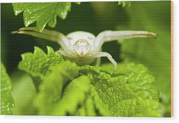 White Flower Spider Wood Print by Jouko Mikkola