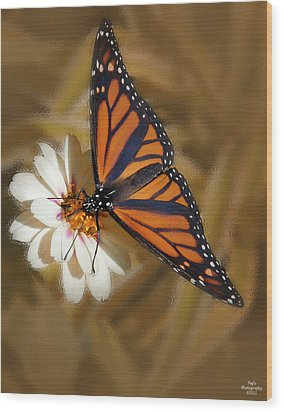 White Flower With Monarch Butterfly Wood Print