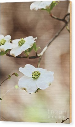 Wood Print featuring the photograph White Flowering Dogwood Tree Blossom by Stephanie Frey