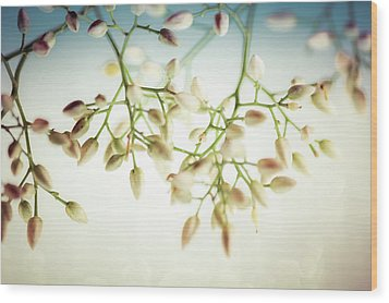 Wood Print featuring the photograph White Flowers by Bobby Villapando