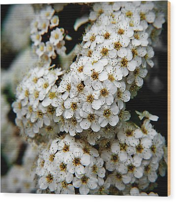 White Flowers In Tennoji Park, Osaka Wood Print by Photos by Jeremy Tan