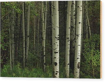 Wood Print featuring the photograph White Forest by James BO Insogna