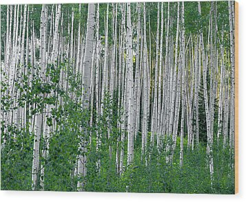 Wood Print featuring the photograph White Forest by Tim Reaves