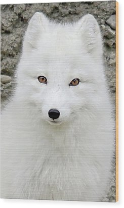White Fox Wood Print