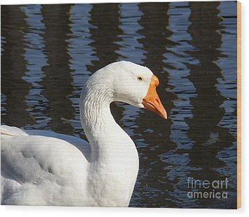 Wood Print featuring the photograph White Goose by Elizabeth Fontaine-Barr