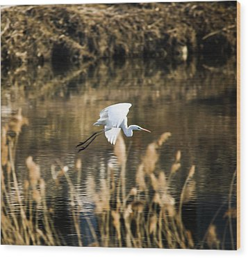 White Heron Wood Print
