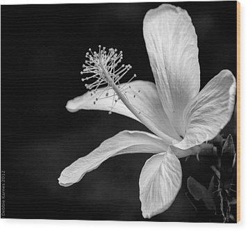 White Hibiscus Black And White Wood Print by Debbie Karnes