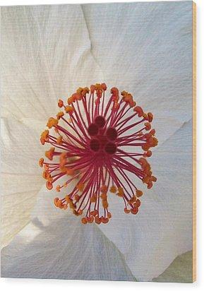 White Hibiscus - Edit Wood Print