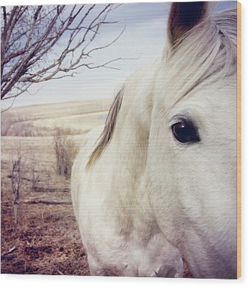 White Horse Close Up Wood Print by Lori Andrews