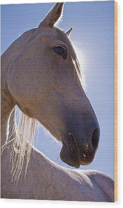 White Horse Wood Print by Dustin K Ryan