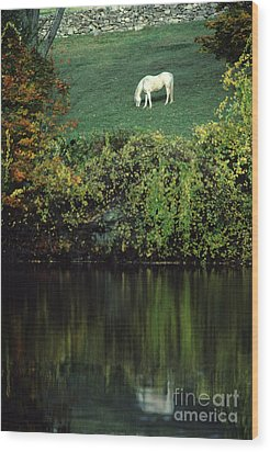 White Horse Reflected In Autumn Pond Wood Print