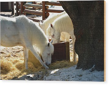 Wood Print featuring the photograph White Horses Feeding by David Lee Thompson