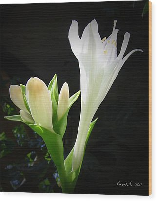Wood Print featuring the photograph White Hostas Blooming 7 by Maciek Froncisz