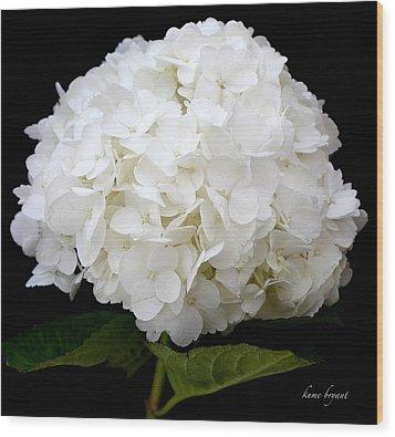 White Hydrangea Wood Print by Kume Bryant
